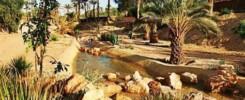 oasis chenini